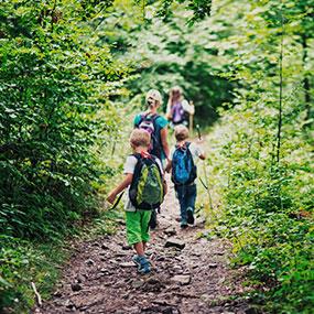 Bild von Kindern die auf einem Pfad durch den Wald wandern.